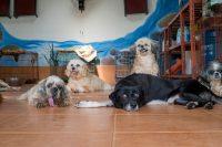 Soi Dog Foundation - Small Dogs Run