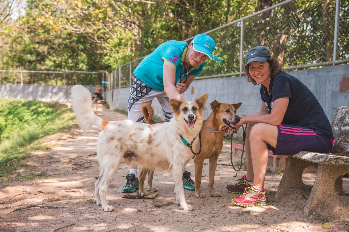 Soi Dog Foundation - Walking the dogs