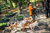 Soi Dog Foundation - Puppy Run