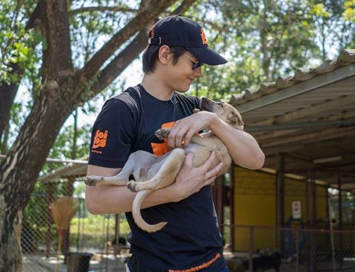 Thai shining star from Channel 3 visits Phuket's Soi Dog Foundation