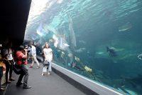 Aquaria Phuket - 001