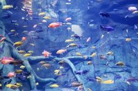 Aquaria Phuket - 002