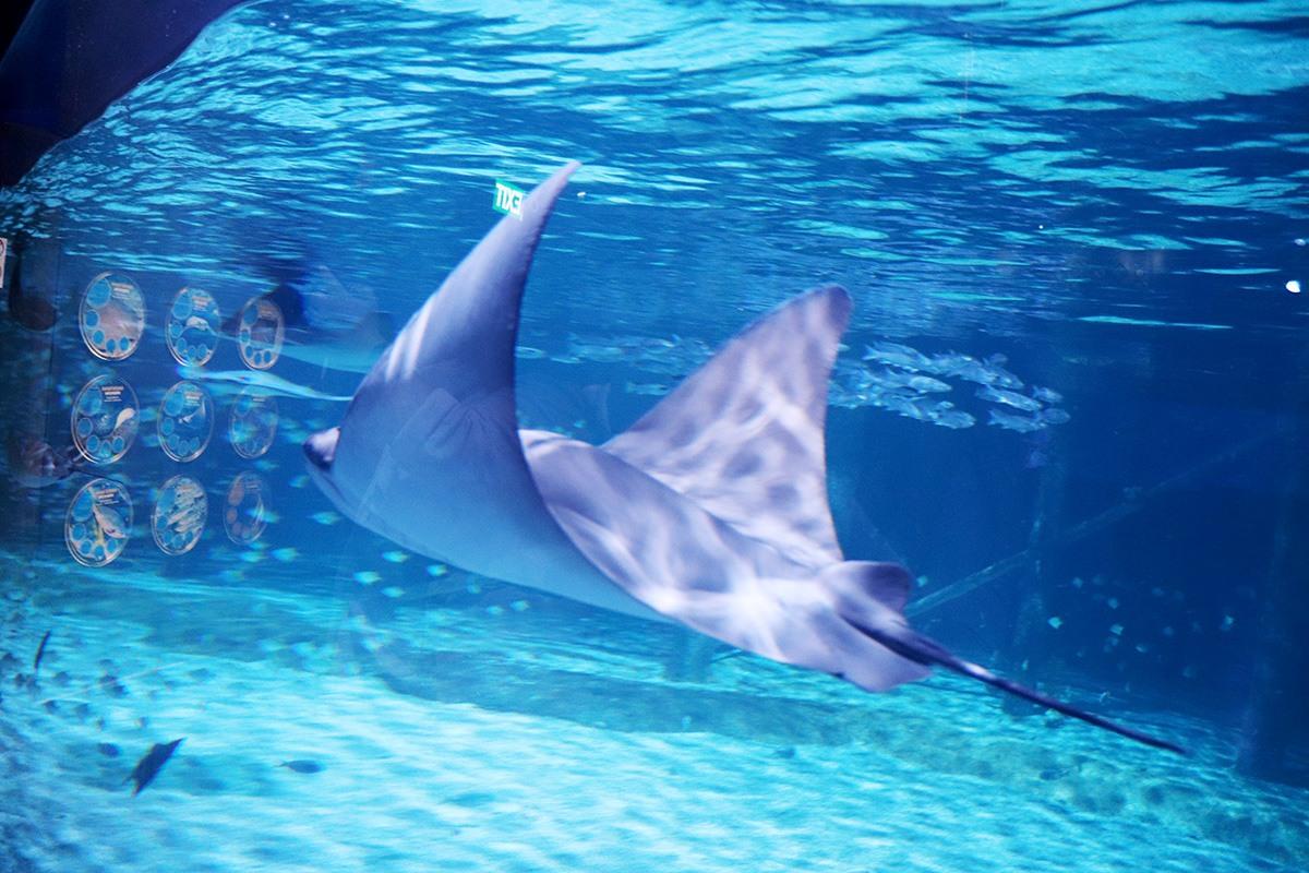Aquaria Phuket - 003