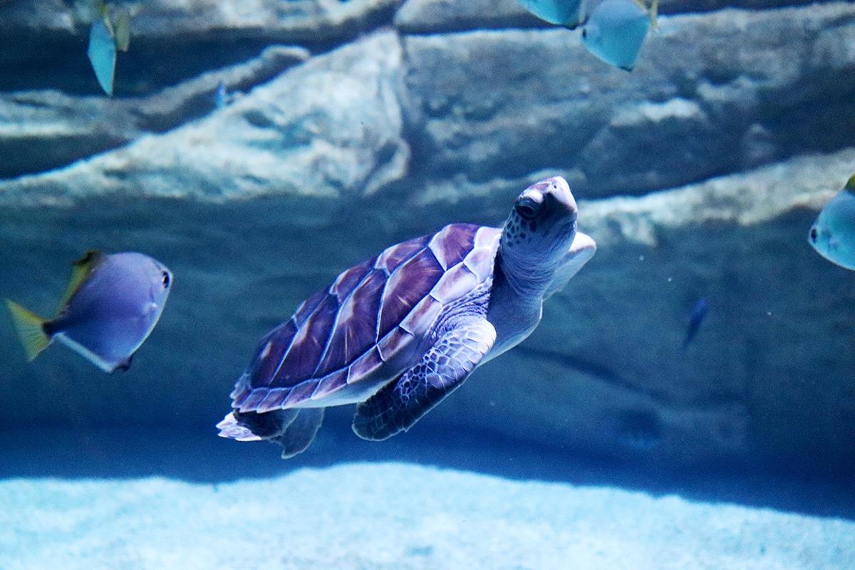 Aquaria Phuket - 006