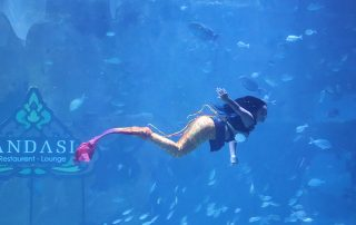 Aquaria Phuket Grand Opening - 003